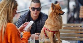 Un couple se voit servir son chien dans un restaurant asiatique